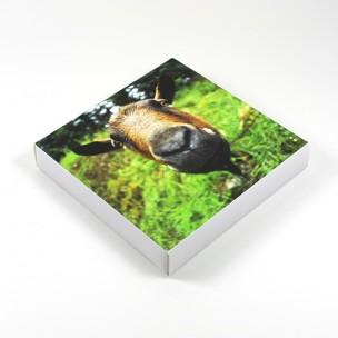 http://zoingimage.com/1282-thickbox_default/brighton-rock-1.jpg