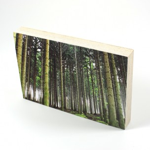 http://zoingimage.com/2029-thickbox_default/birch-plywood.jpg