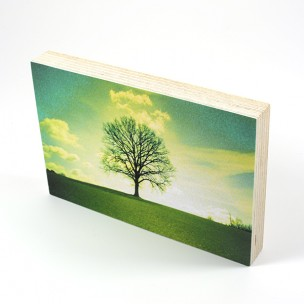 http://zoingimage.com/2034-thickbox_default/birch-plywood.jpg