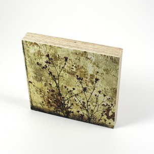 http://zoingimage.com/2054-thickbox_default/birch-plywood.jpg