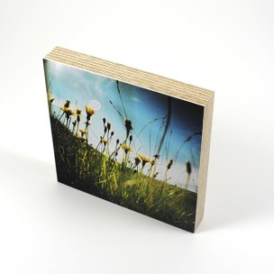http://zoingimage.com/2057-thickbox_default/birch-plywood.jpg