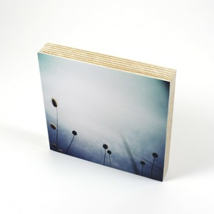 http://zoingimage.com/2068-thickbox_default/birch-plywood.jpg